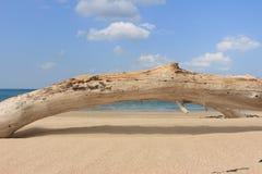 Holz auf dem Strand Stockfoto