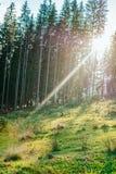 Holz auf den Bergen stockbild
