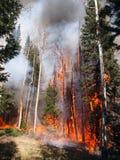 Holz auf Feuer stockfoto