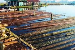 Holz auf Wasser, Holland stockfoto
