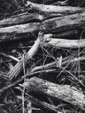 Holz aus den Grund Stockfoto