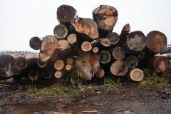 Holz aus den Grund Herbst Lizenzfreie Stockbilder
