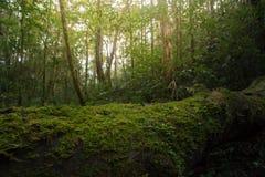 Holz bedeckt mit grünem Moos im Wald Lizenzfreie Stockfotos