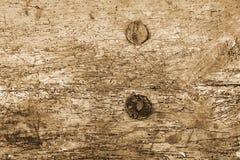 Holz beschädigt durch Woodworm Lizenzfreies Stockbild