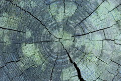 Holz-Cutaway Stockfotografie