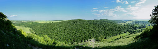 Holz, das auf Berg wächst Stockbild