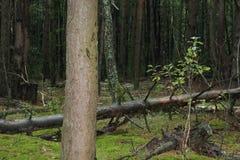 Holz - das Gleiskettenfahrzeug im Wald Lizenzfreie Stockfotografie