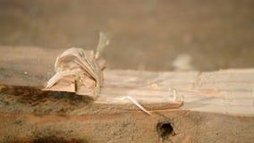 Holz, das mit Meißel schnitzt stock video footage