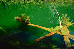 Holz in der Reflexion Stockfotos