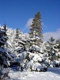 Holz des blauen Himmels und des Schnees Stockbilder