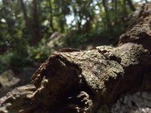 Holz in einem Dschungel Stockfotos