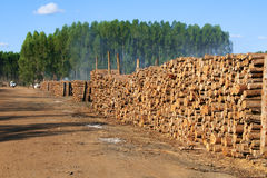 Holz für die Produktion der Holzkohle stockfotografie