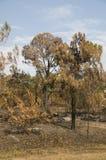 Holz gebrannt von Fire Lizenzfreie Stockfotografie
