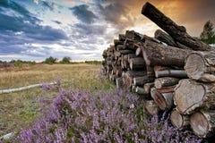 Holz gehackter Heidemoor-Sonnenuntergang Stockbilder