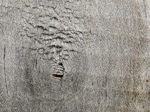 Holz gnarl Lizenzfreies Stockfoto