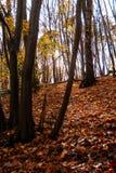 Holz am Herbst stockfotos