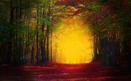 Holz in Herbstmärchen Stockfotos