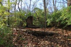 Holz im Fall Stockfotografie