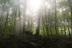 Holz im Fall Stockfoto