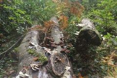 Holz im Fall Lizenzfreies Stockfoto
