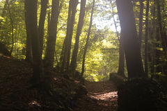 Holz im Fall Lizenzfreies Stockbild