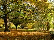 Holz im Herbst Stockbilder