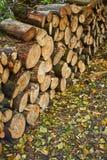 Holz im Herbstwald Stockbilder