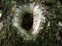 Holz im Loch stockfoto