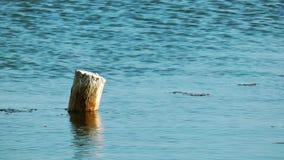 Holz im Meer stock video footage