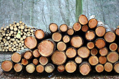 Holz im Wald Stockbilder