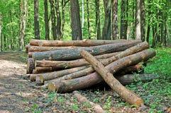 Holz im Wald Lizenzfreies Stockfoto