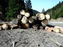 Holz im Wald Stockfotografie