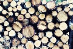 Holz im Wald Stockfoto