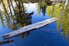 Holz im Wasser lizenzfreie stockbilder