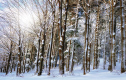 Holz im Winter lizenzfreies stockbild