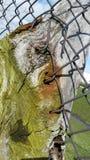Holz innerhalb des Kettengliedzauns lizenzfreies stockfoto