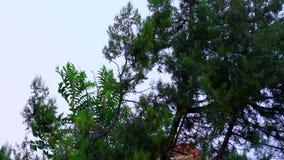 Holz kurz vor dem Sturm stock video