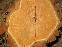 Holz mit Altersring lizenzfreies stockbild