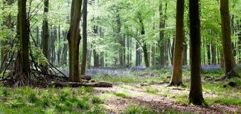 Holz mit Bluebells und Morgenleuchte Stockbild