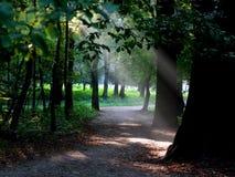 Holz mit den Strahlen der Sonne durch fallend Lizenzfreie Stockfotos