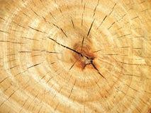 Holz mit Wachstumring Stockfoto