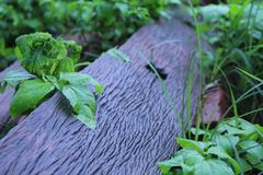 Holz nach Regen lizenzfreie stockfotos