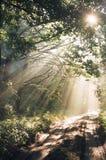 Holz nach Regen in den Sonnestrahlen Lizenzfreies Stockbild