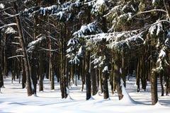 Holz nach Schneefälle und ein Blizzard Lizenzfreie Stockfotos
