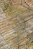 Holz schellt Beschaffenheit Stockfotografie