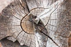 Holz schellt Beschaffenheit, gebrochenen hölzernen Schnitt Stockfotografie