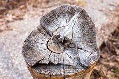 Holz schellt Beschaffenheit, gebrochenen hölzernen Schnitt Konzept von altem und von Herbst Lizenzfreies Stockbild