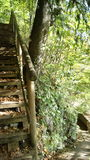 Holz Stiegen im wald Stock Photography