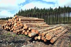 Holz- und Forstwirtschaft Stockfotografie