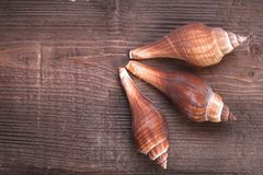 Holz und Meer Shell Stockfotografie